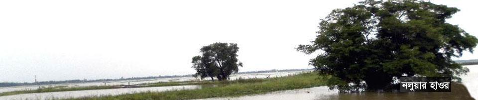 নলুয়ার হাওর